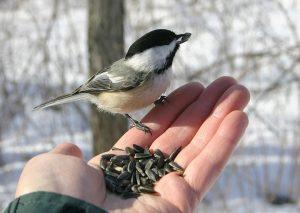 bird sitting on hand