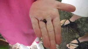Worm in hand