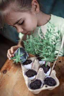 Pretty schoolgirl growing kitchen herbs in the eggshell, rosmary and thyme, zero waste gardening concept, greenhouse and healthy lifestyle